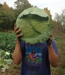 Zack-with-Cabbage-C-(2)