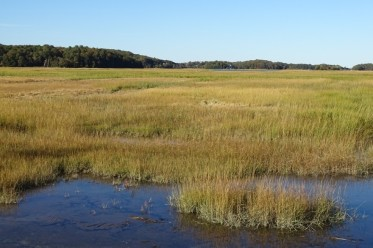 The Window on the Marsh as seen from Rte 128